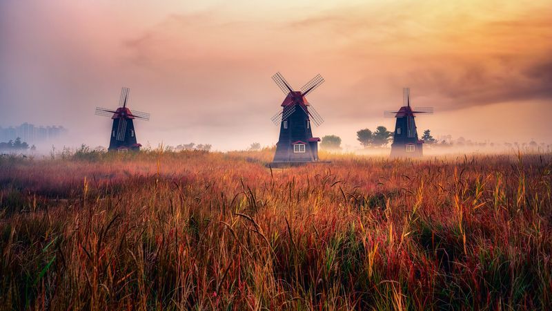 windmill foliage forest fog morning landscape cloud sky Kroea cloudy morningphoto preview