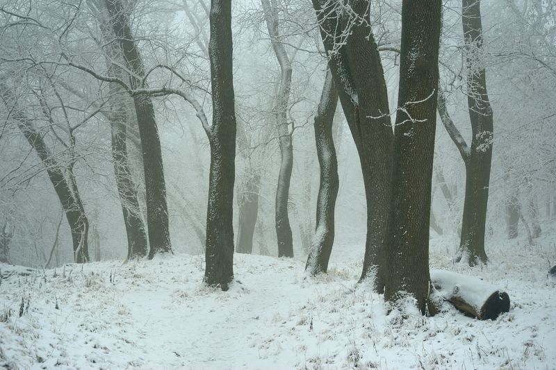 зима лес туман снег дуб Дубовая рощаphoto preview