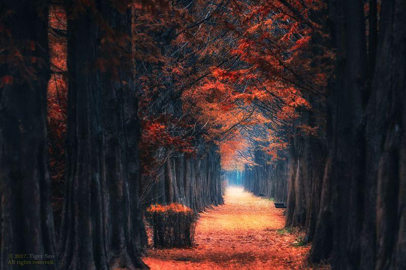 autumn path trees light foliage landscape bench Korea path to winterphoto preview