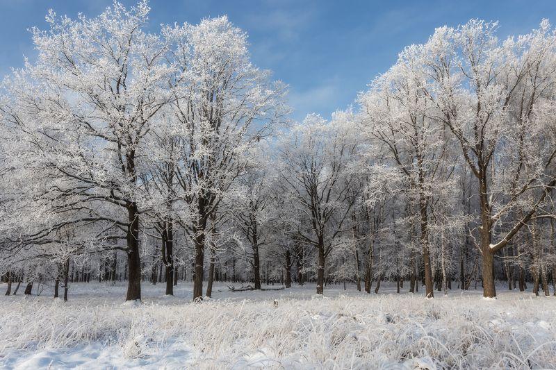 природа, пейзаж, зима, сказка, nature, landscape, tale ***photo preview