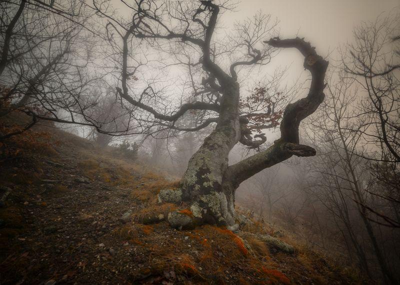 крым,лес,туман,демерджи,гора,природа,пейзаж,осень,фототур,деревья,россия Призраки Демерджиphoto preview