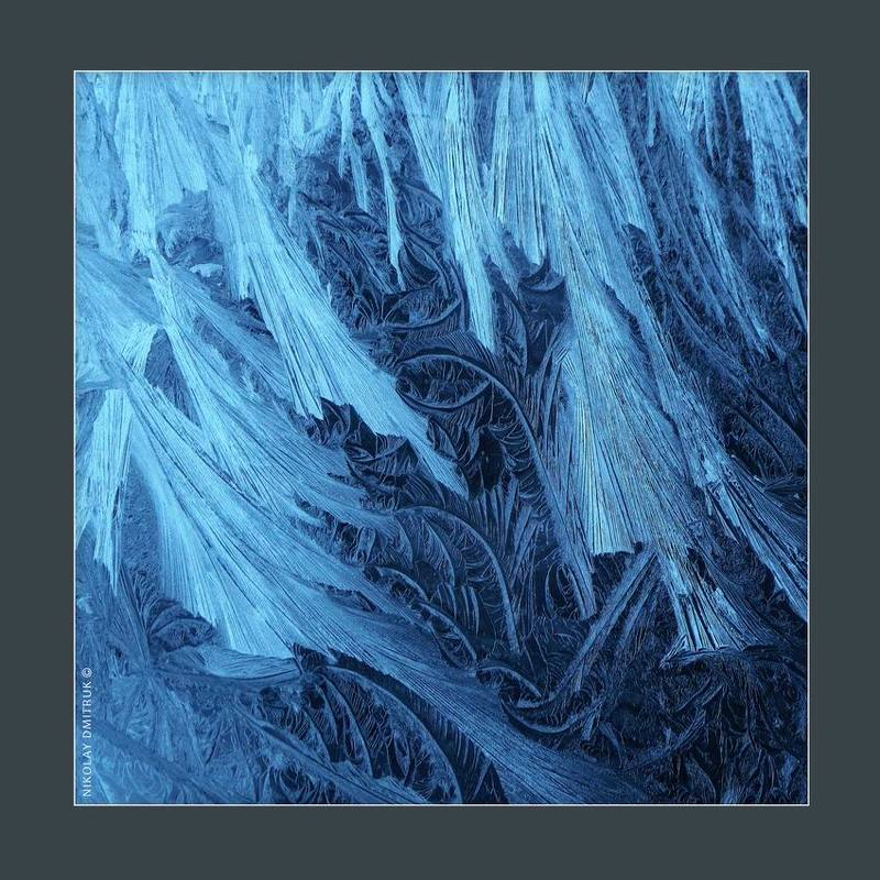 макро, мороз Чеширский лесphoto preview