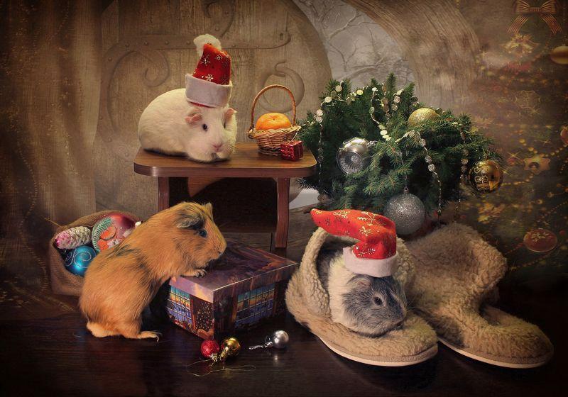 композиция, животные, морские свинки, новый год В гостях у Деда Морозаphoto preview