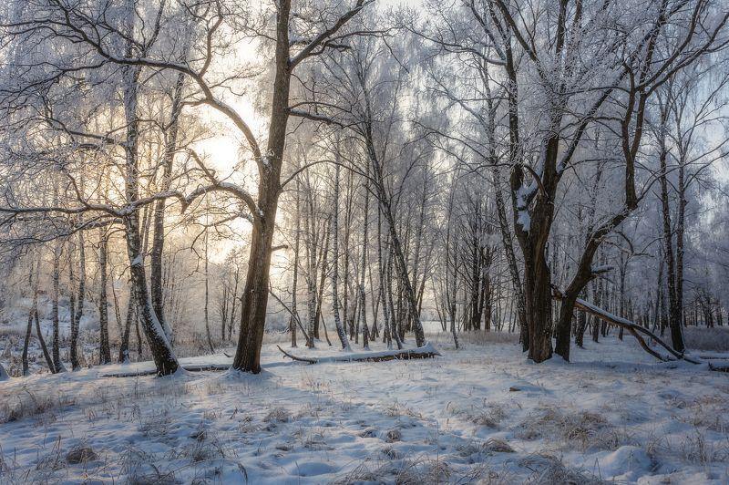 пейзаж, природа, московская область, зима, рассвет Зима, лес, рассветphoto preview