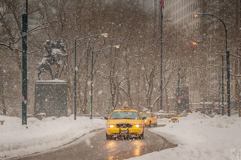 Yellow Cabs in Central Parkphoto preview