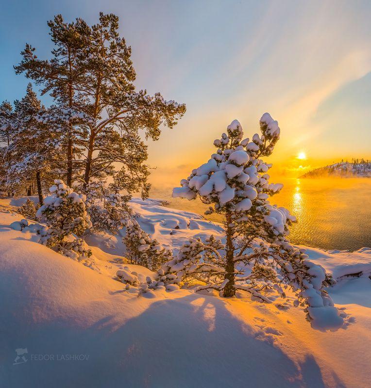карелия, новый год, зима, снег, рассвет, солнце, вода, залив, ладожское озеро, сосна, дерево, Поздравление от Ладоги!photo preview