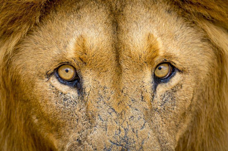 юар, lion park, Lion Parkphoto preview