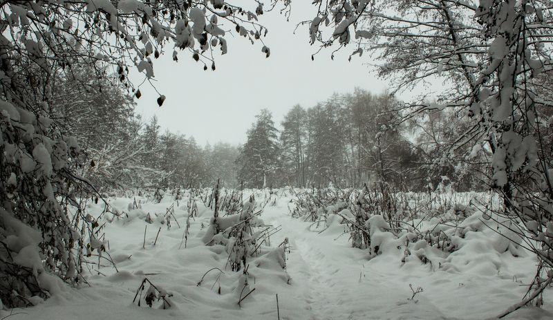 лес, зима, снег, берёзы, туман photo preview