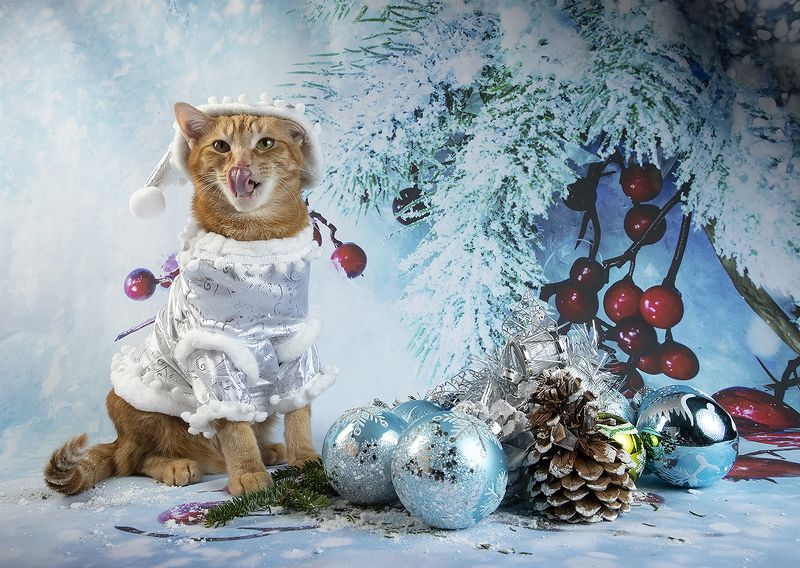 сat, кошка, животные, кошки, рыжий кот,  ginger, новый год, американский короткошерстный кот, american shorthair cat, праздник C Новым Годом! Happy New Year!photo preview