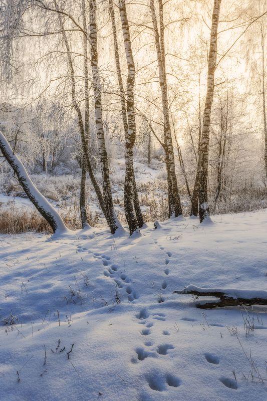 природа, пейзаж, зима, московская область photo preview