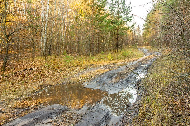 осень, октябрь, лужи, лес, заповедник, дорога, грязь photo preview