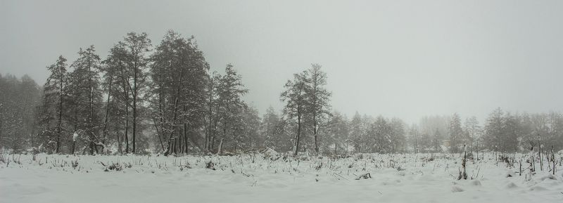 лес, зима, снег, туман photo preview