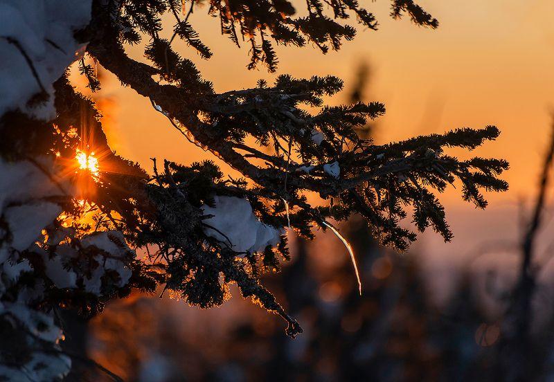 утро, пихты, мороз, солнце, зима, гора зелёная, шерегеш, горная шория, сибирь Доброе утро, Шерегеш!)photo preview