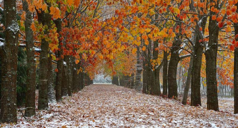 осень снег аллея листва Осеньphoto preview