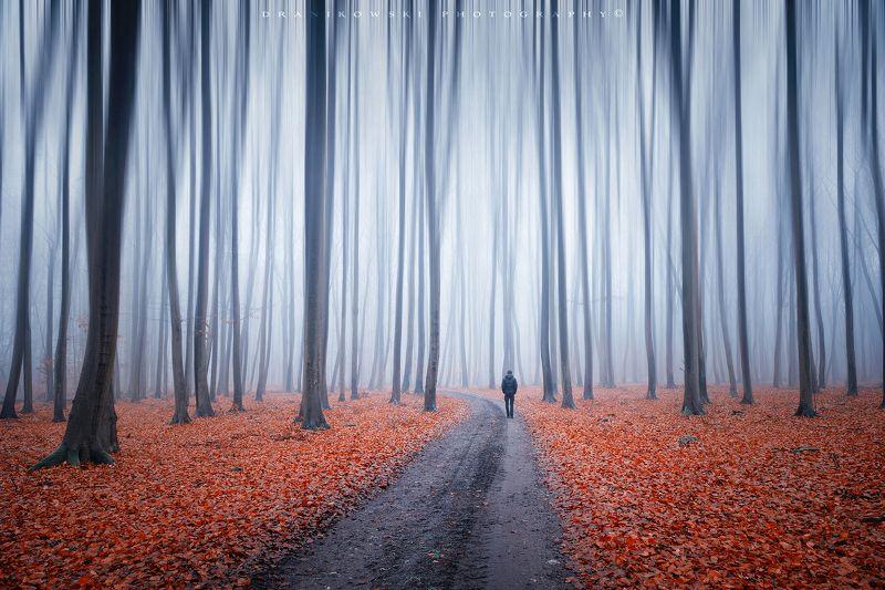 a man alone with himself sam dark forest trees path road mist magic dranikowski foggy morning autumn fall A man alone with himselfphoto preview