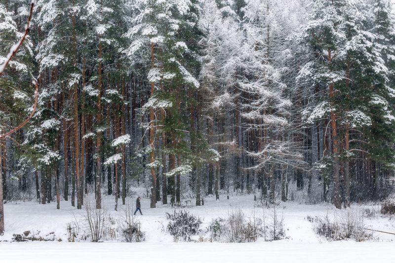 природа, зима, пейзаж, московская область ***photo preview