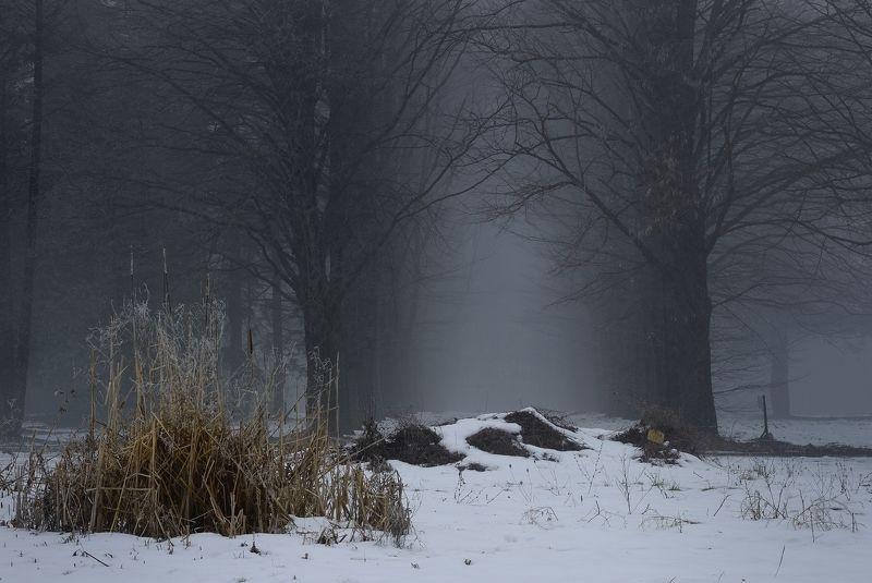 зима лес снег утро туман Ставропольская зима 2019photo preview