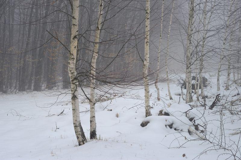 зима лес снег утро туман береза Березкиphoto preview