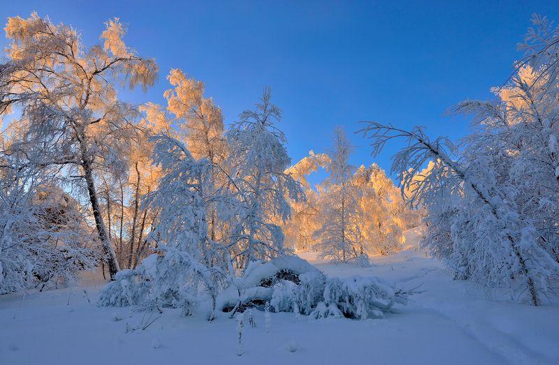 Нежность зимыphoto preview