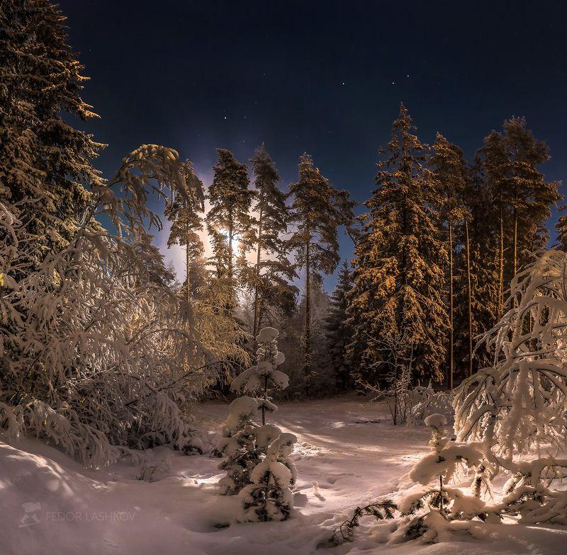 ночь, ленинградская область, зима, снег, полнолунье, луна, сосны, праздник, рождество, лес, Рождественская ночьphoto preview