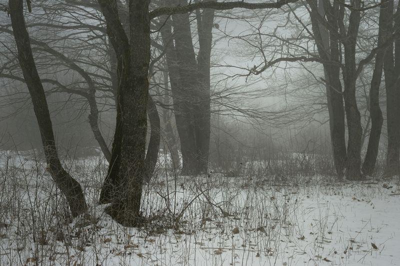 зима лес снег утро туман Темная зимаphoto preview