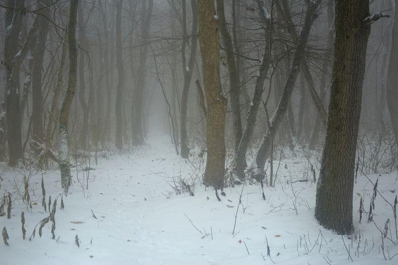 зима лес снег утро туман Зимний лесphoto preview