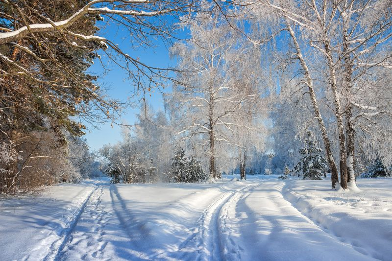 усмань, сосны, снег, рождество, мороз, лес, иней, зима, заповедник, берёзы Рождественские морозыphoto preview