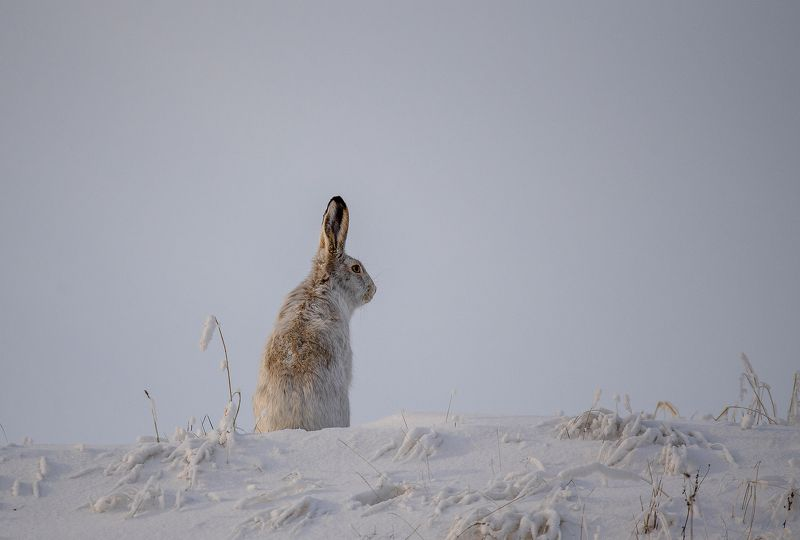 Про зайца...photo preview
