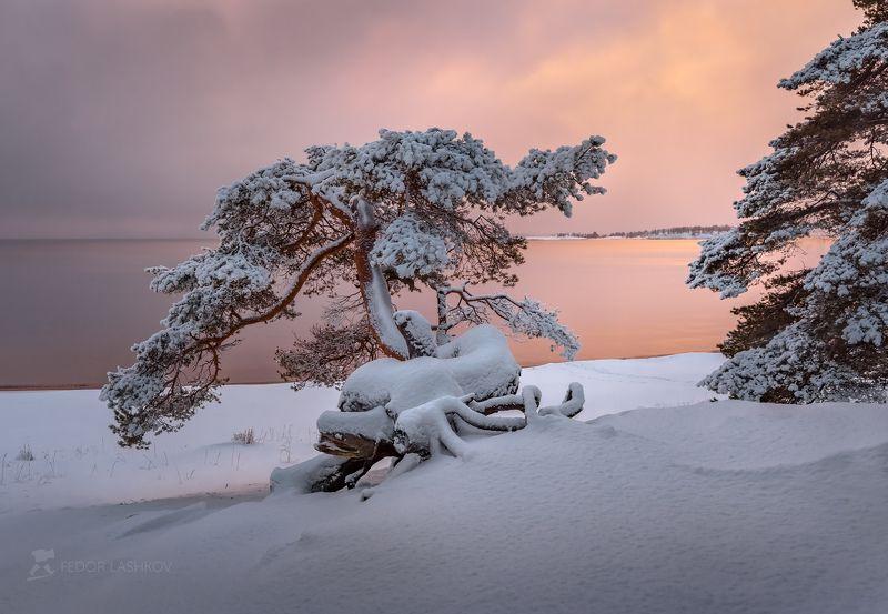 карелия, зима, снег, рассвет, вода, залив, ладожское озеро, сосна, дерево, пасмурно, небо, фототур, pentaxk1, pentaxrussia, pentax Декабрьская Ладогаphoto preview