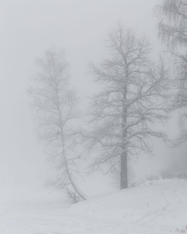 пейзаж, зима, туман, природа photo preview
