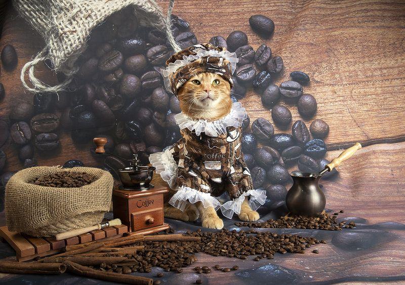 кофе, coffee, маркиз, рыжик, кофейные зерна, матильда Котики - Хранители Кофеphoto preview