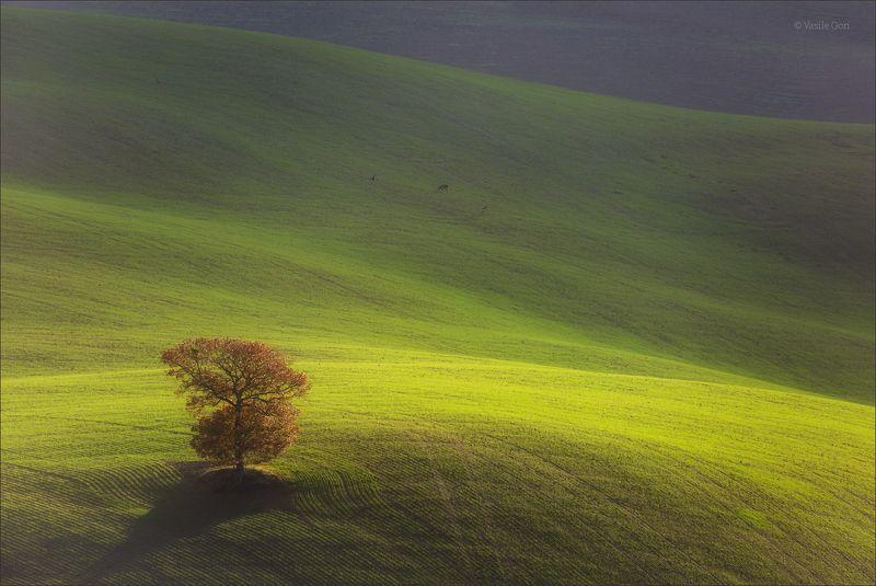 italy,san quirico d\\\'orcia,italia,свет,пейзаж,италия,тоскана,дерево,toscana,зима,tuscany,минимализм Одинокое деревоphoto preview