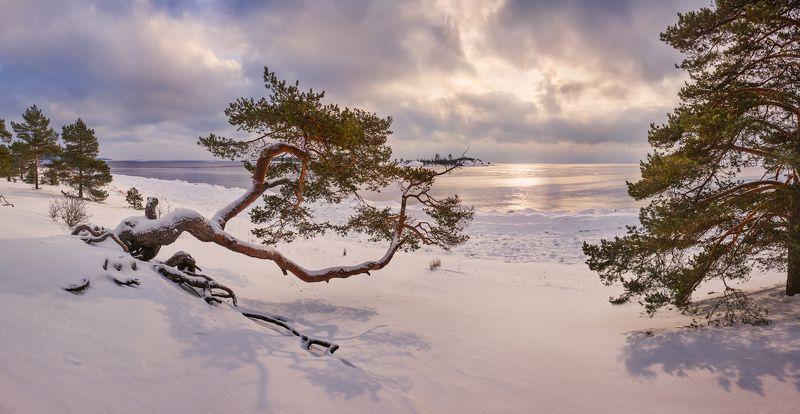 зимняя ладога, ладожское озеро, карелия, шхеры, лед, сосна, койонсаари, пляж \