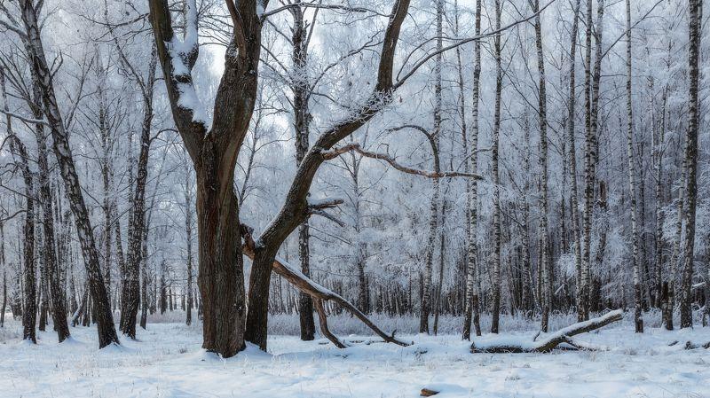 пейзаж, природа, зима Зимняя сказкаphoto preview