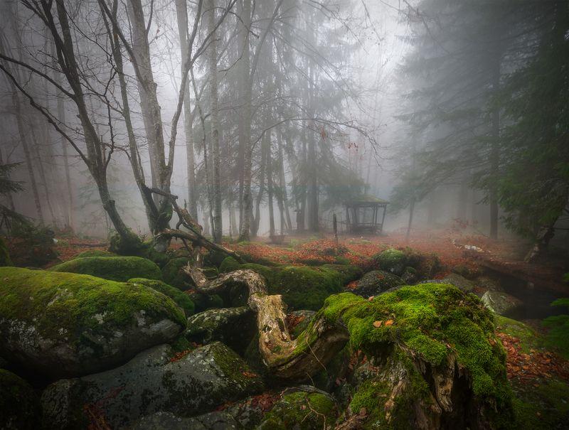 landscape nature scenery forest wood autumn mist misty fog foggy river longexposure mountain rocks vitosha bulgaria туман лес oсень Forest stories / Autumn фото превью