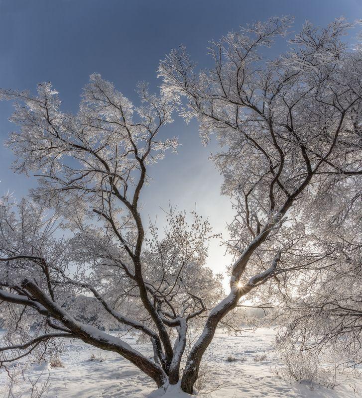 пейзаж, природа, зима, настроение, зима, мороз photo preview