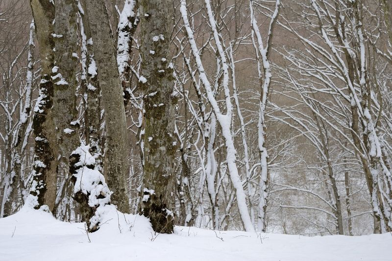 зима лес снег утро Утро зимнего лесаphoto preview