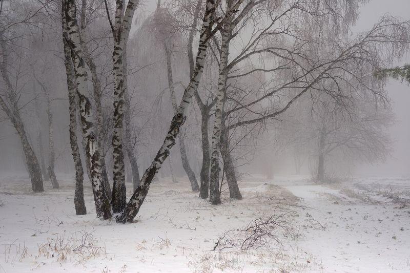 зима лес снег утро туман Туманное утроphoto preview