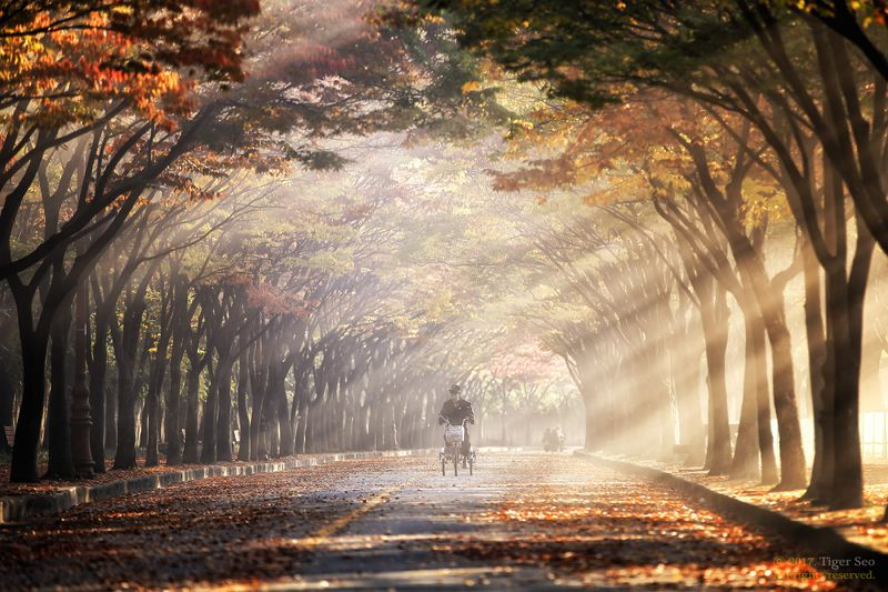 rays morning trees rider landscape travel light sunrise Korea rays in the morningphoto preview