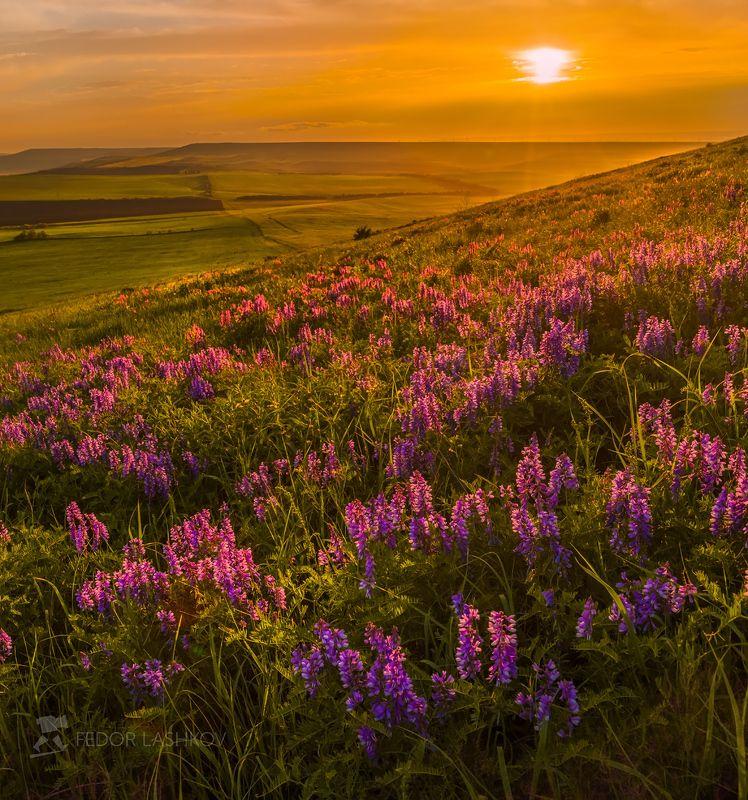 pentax645z, pentaxrussia, pentax, ставропольский край,  путешествие, фотоальбом, цветы, природа, облака, горошек, трава,  закат, солнце, степь, холм Цветущая степь на закатеphoto preview