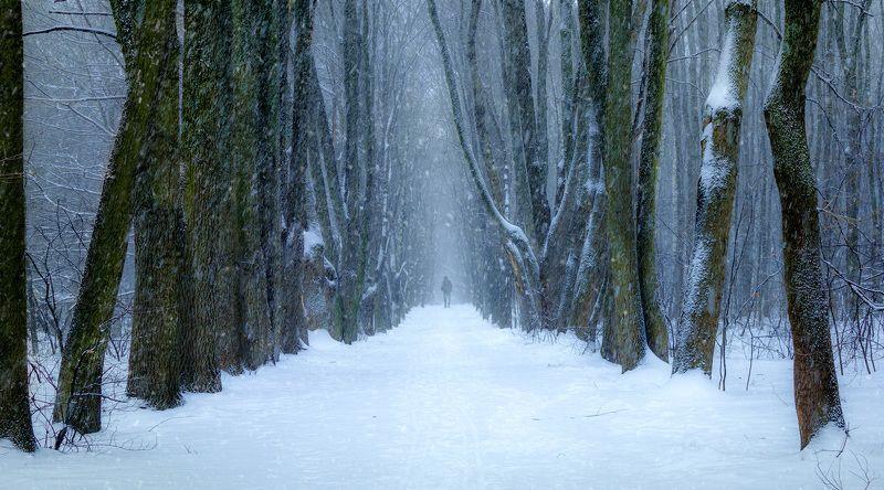 лес, зима, снегопад, снег, деревья Просекаphoto preview