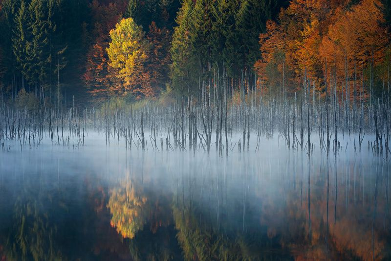 forest, trees, autumn, fog, landscape, travel, nature, mountain ,romania, lake, colors, sunrise, reflection Morning moodphoto preview