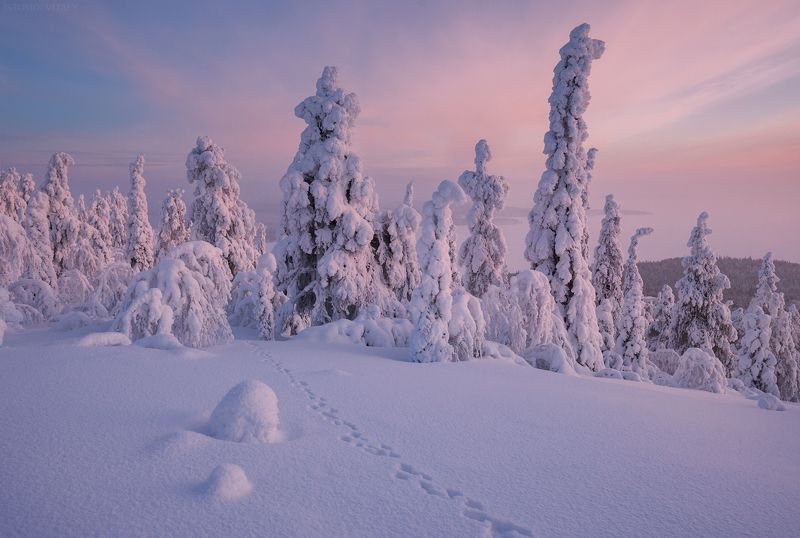 пейзаж,зима,снег,россия,закат,следы,кольский,север Хибинский лесphoto preview