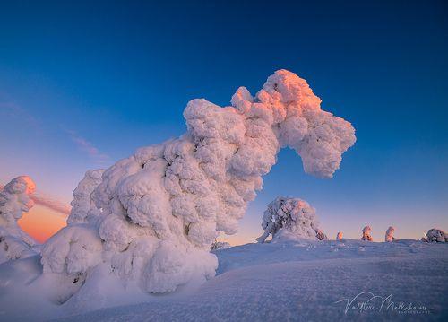 Стражи зимней Лапландии