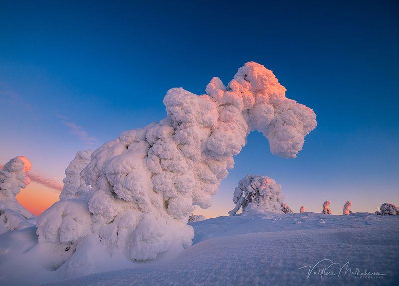 Стражи зимней Лапландииphoto preview