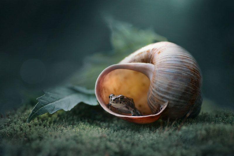 лягушка, ракушка, макро, природа, зеленый лист photo preview