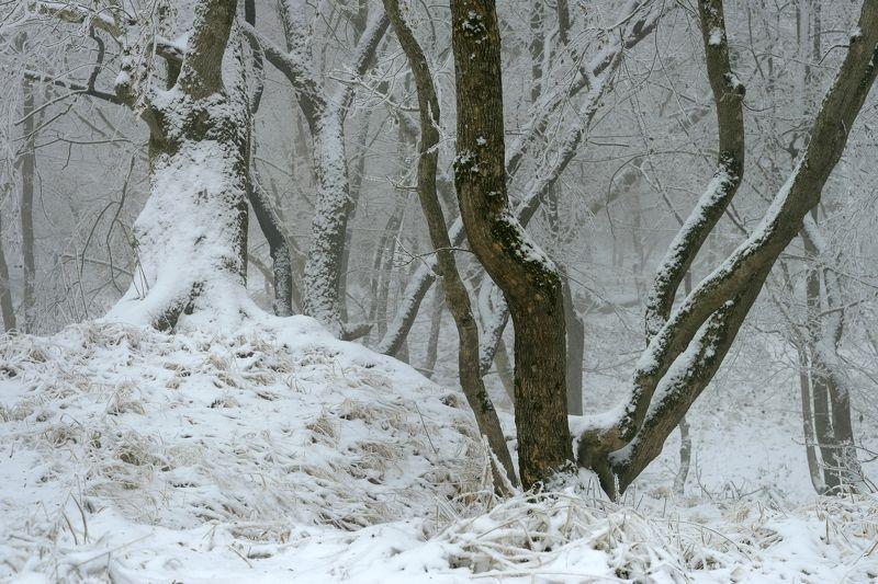 зима лес снег утро Зимний лесphoto preview