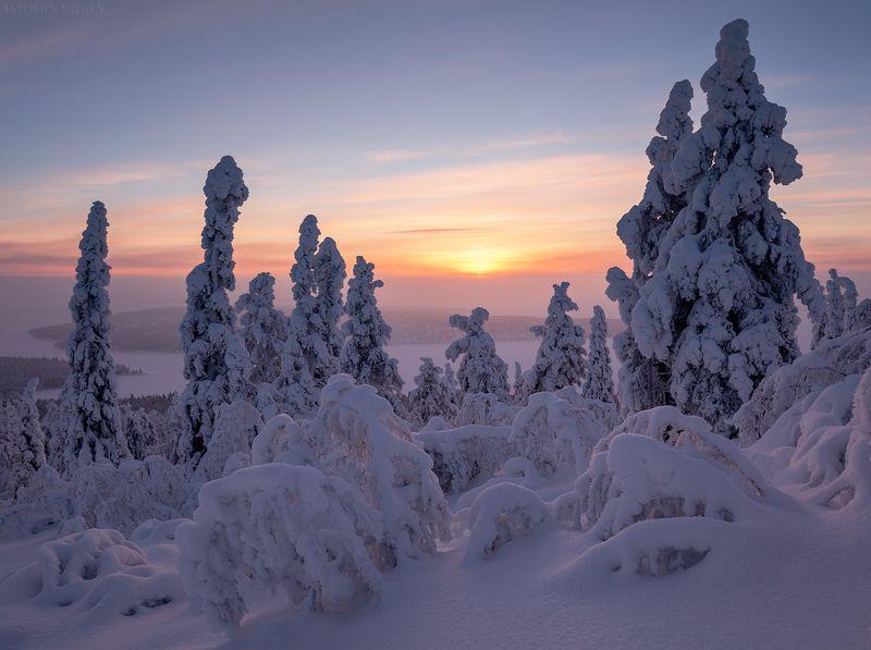 пейзаж,кольский,север,россия,лес,зима,цвет,солнце photo preview
