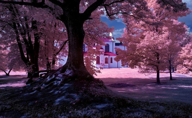 infrared,ик-фото,инфракрасное фото, инфракрасная фотография, пейзаж, лето, беларусь Стволы и корни. Инфракрасная фотография.photo preview