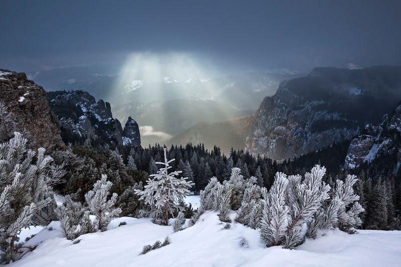 winter, trees, storm, snow, landscape, travel, nature, mountain, romania, cold, sunrise, light Gold Curtainphoto preview